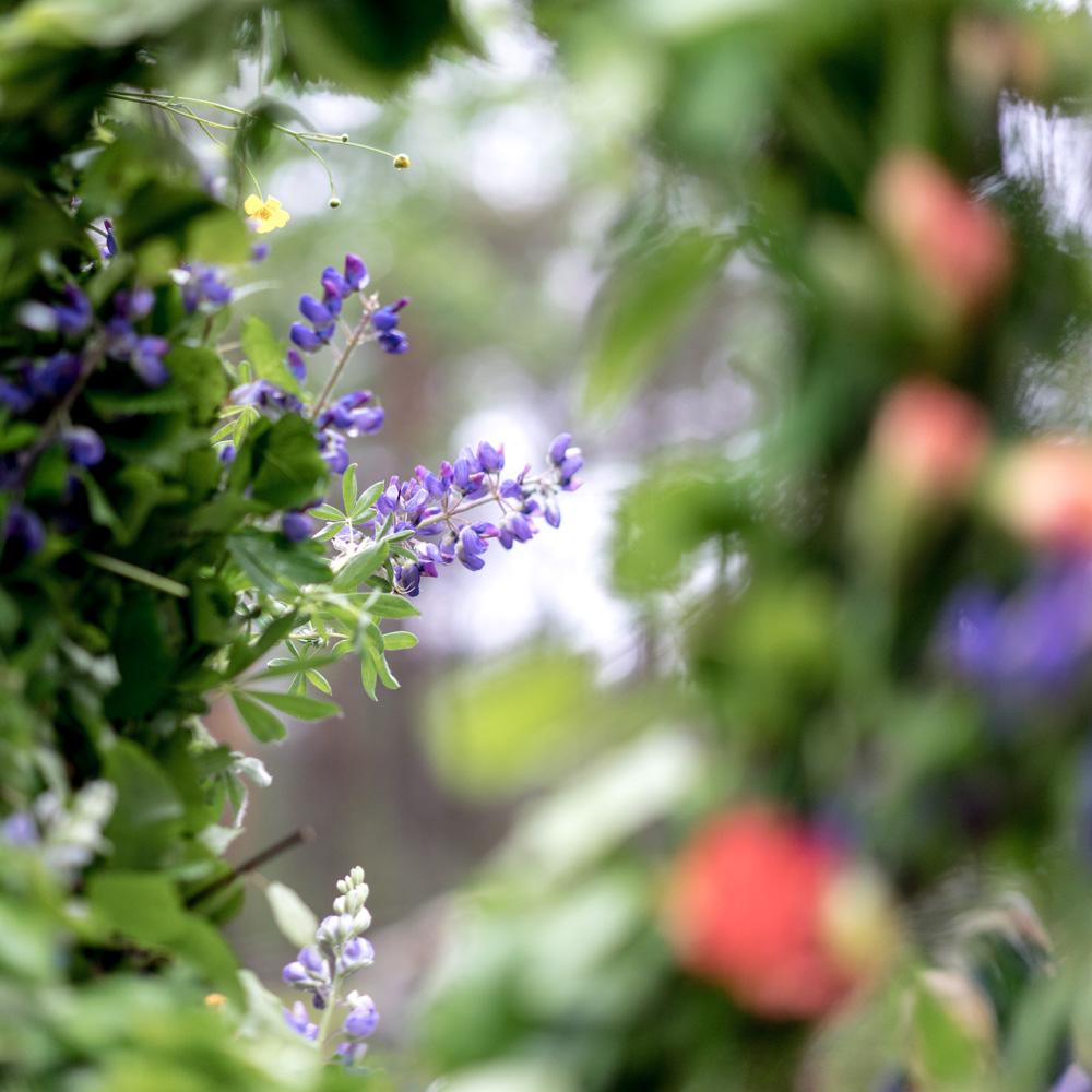 Blumen zum Kranzbinden